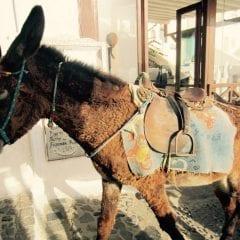 Santorini, dragoste la prima vederegall-28