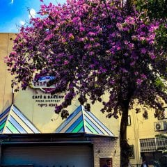Tel Aviv si Haifagall-10