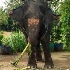 Thailanda dincolo de zambetgall-9