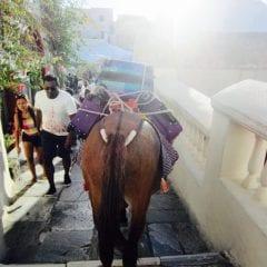 Santorini, dragoste la prima vederegall-4