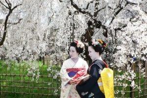 Sakura – sarbatoarea ciresilor infloriti